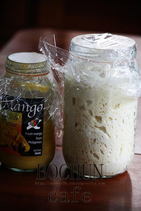 マンゴー酵母